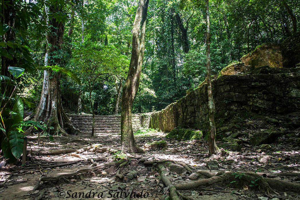 Ruinas Palenque, Chiapas, México.