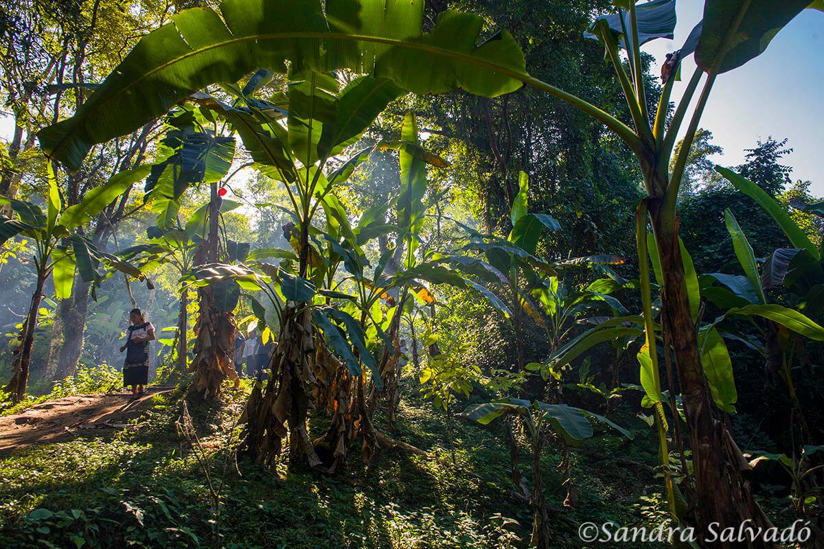 Jungle, Agua Azul, Chiapas, Mexico.
