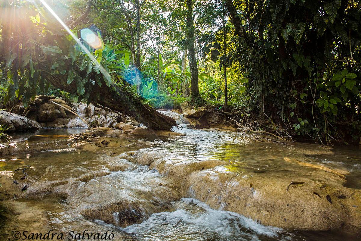 Selva. Chiapas México.