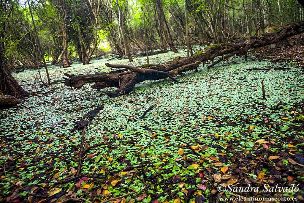 The Calakmul Biosphere Reserve, Yucatan Peninsula, México