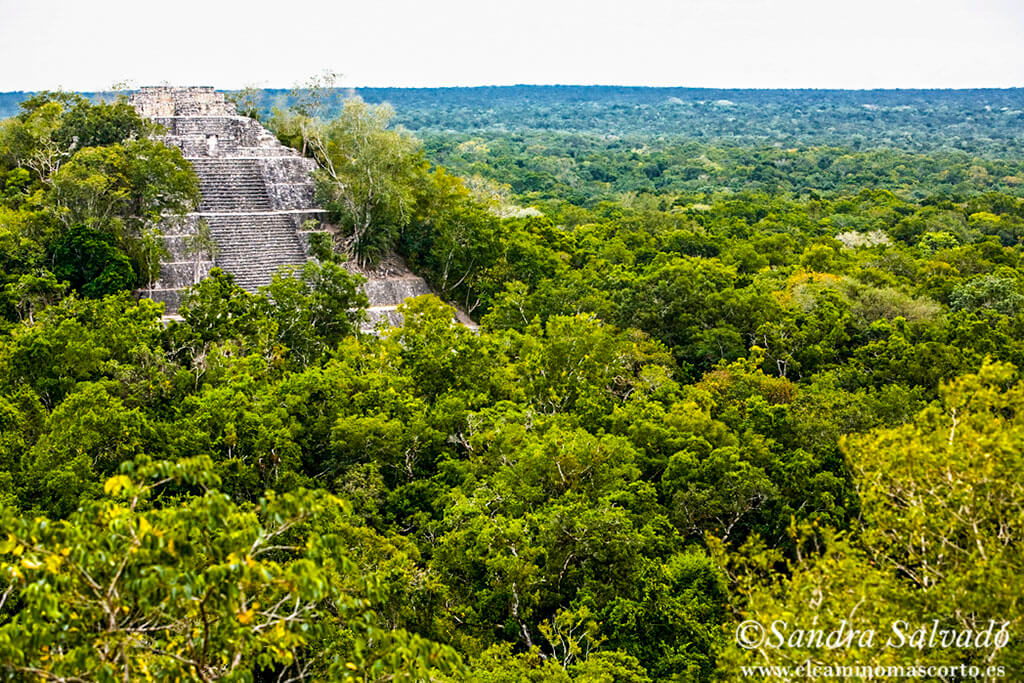archeological zone calakmul campeche