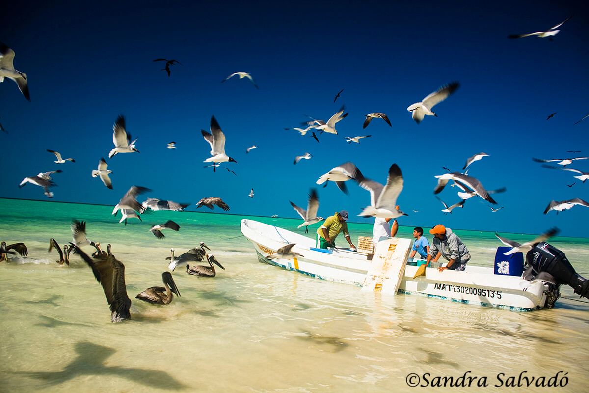 How to get to Holbox from Cancun, Playa del Carmen and other 3 destinations