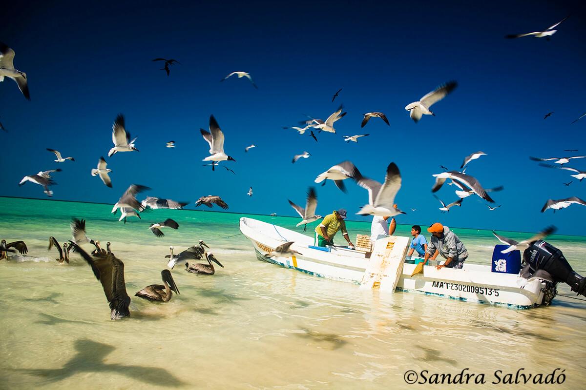 Cómo llegar a Holbox desde Cancún, Playa del Carmen y otros destinos 3