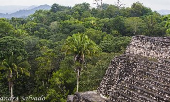Discover the hidden archaeological zone Caracol, Belize