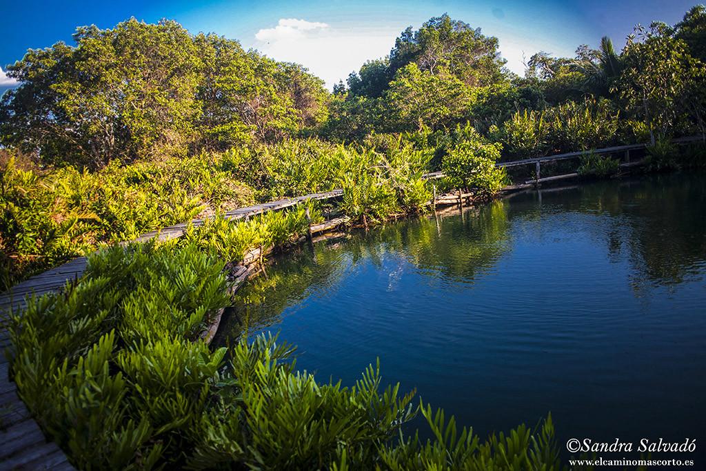 Reserva Biosfera Ria lagartos