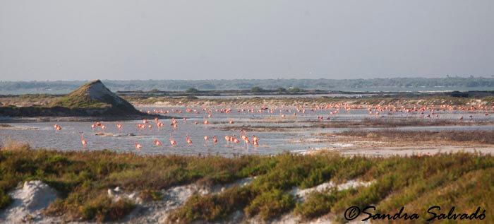 San Felipe, a orillas de la Reserva Biosfera Ría Lagartos 1