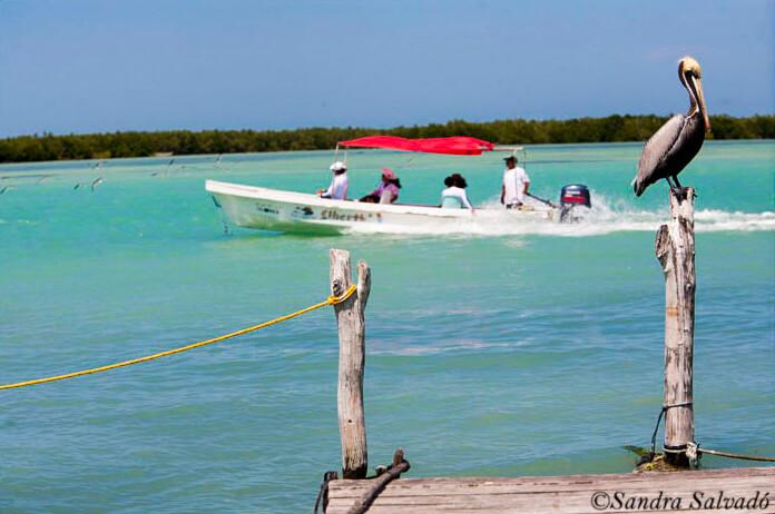Ria Lagartos Biosphere Reserve, Yucatan Peninsula, Mexico.