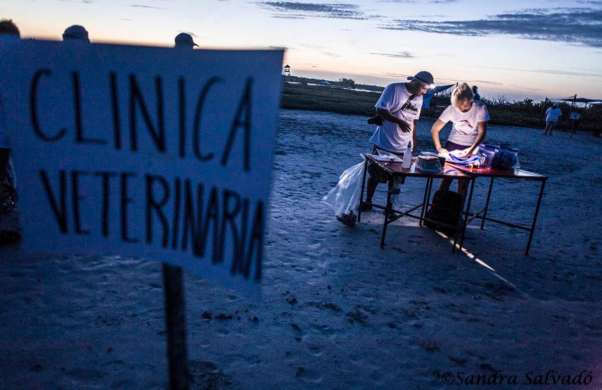 anillar_flamencos_yucatan