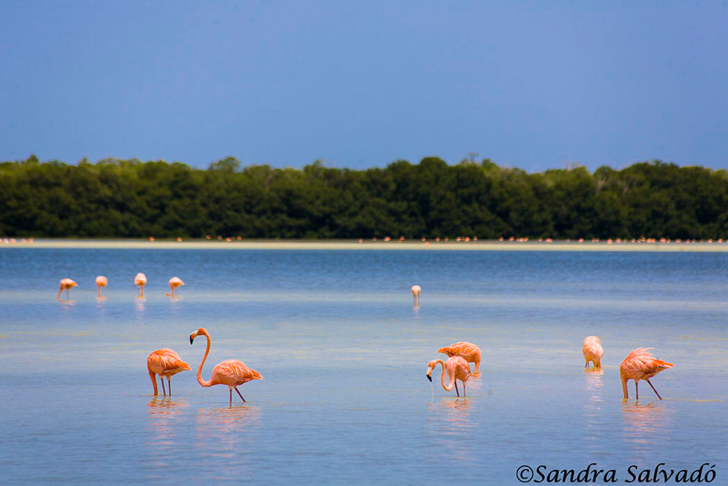 What to do in Merida? The best 9 visits in the surroundings 1