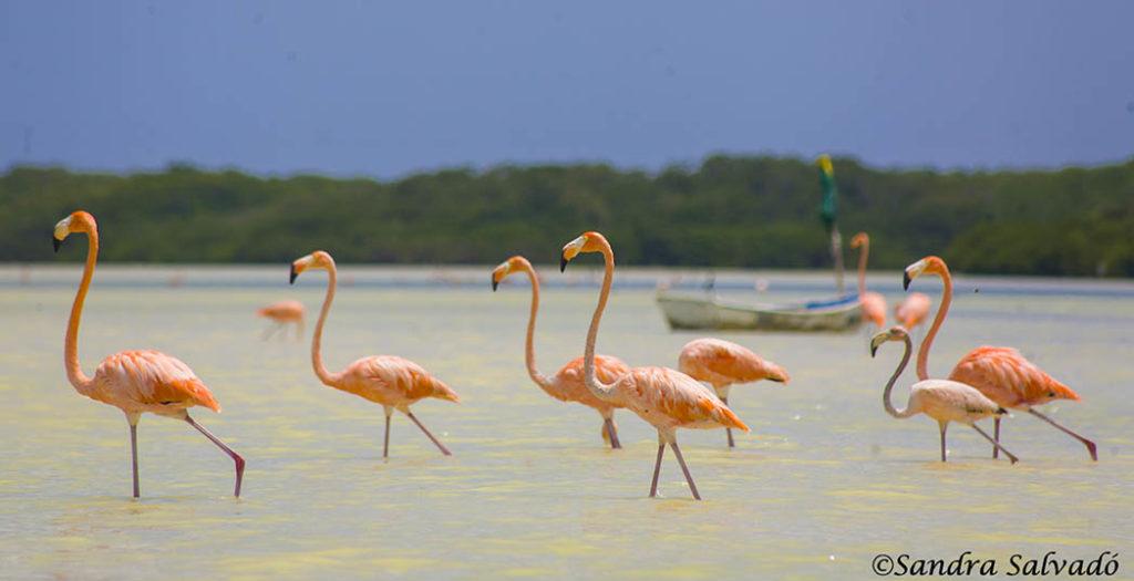 Reserva Biosfera Ría Celestún, Yucatán