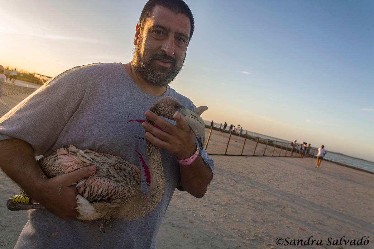 Ring flamingos, a unique experience 10