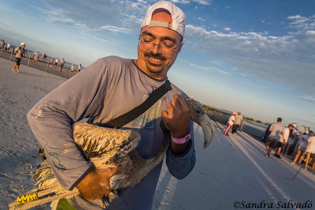 Ring flamingos, a unique experience 12