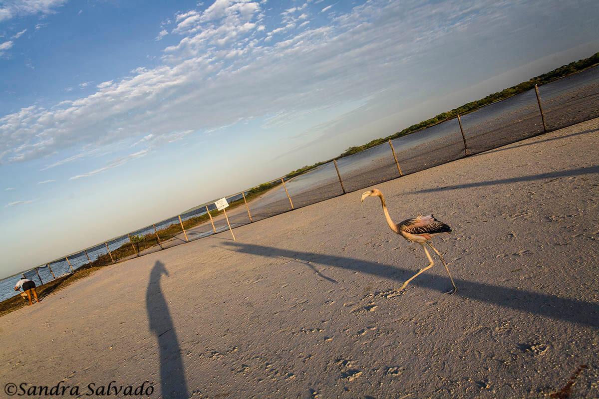 Ring flamingos, a unique experience 5