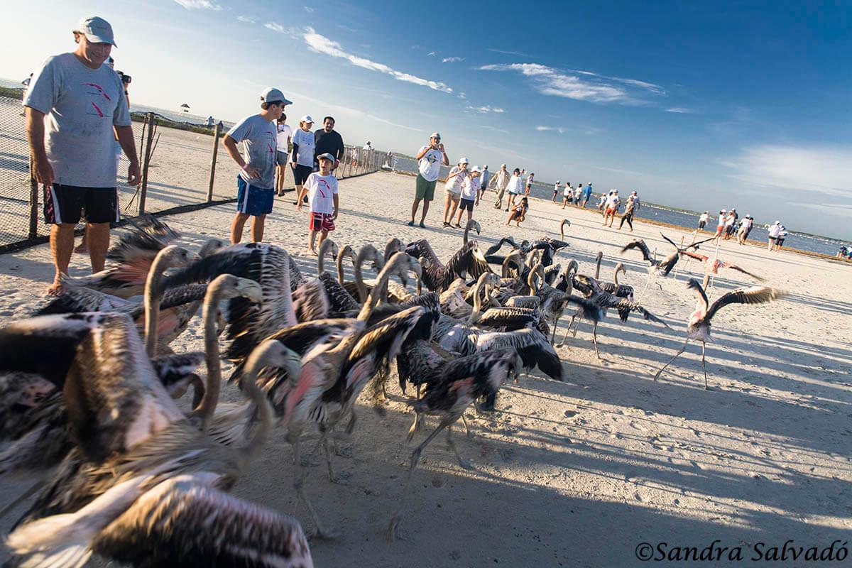 Ring flamingos, a unique experience 7