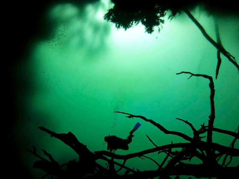 Cenotes en Playa del Carmen: los mejores cenotes en Riviera Maya 1