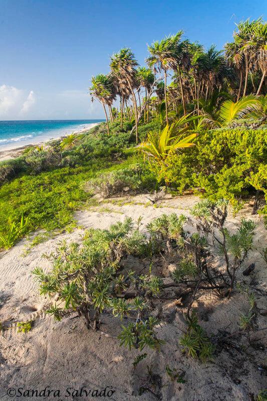 Sian Ka'an Biosphere Reserve, Riviera Maya, Quintana Roo, Mexico.