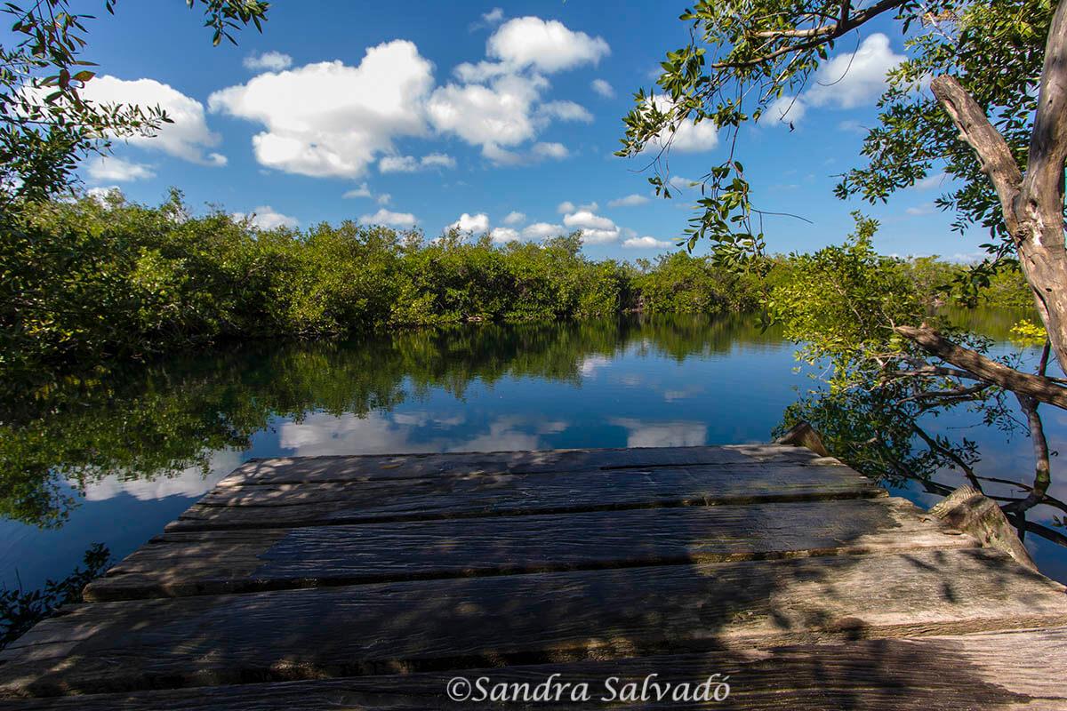 Cenote reserva biosfera sian ka'an, México.
