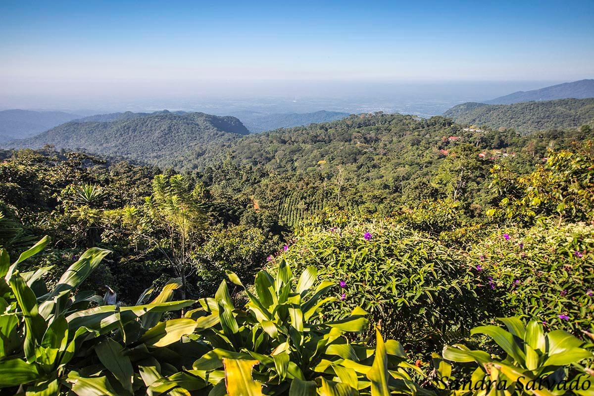 Guía para conocer la Ruta del Café en Chiapas 1