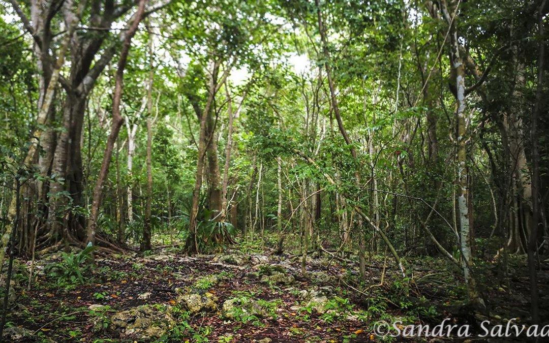 San Manuel km 11 Yucatan