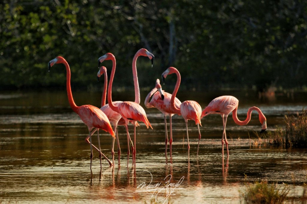flamenco rio lagartos