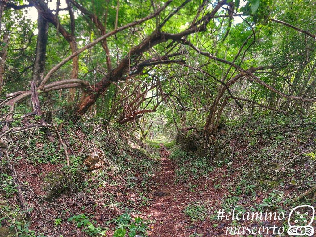 Cómo recorrer el Camino del Mayab en Yucatán, 1er sendero de largo recorrido para senderistas y ciclistas 4