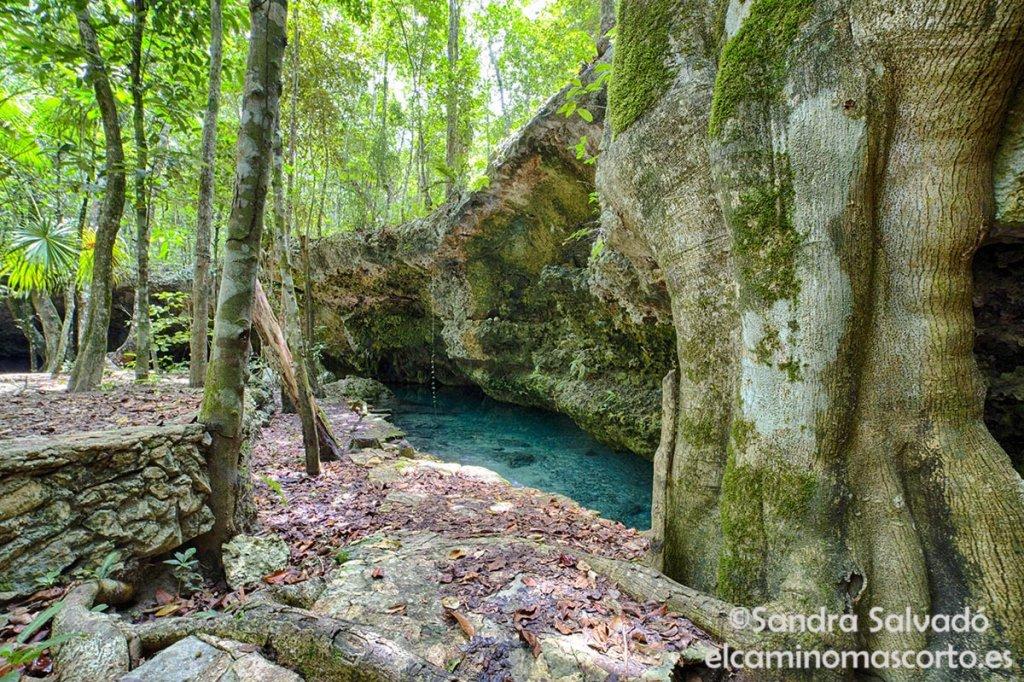 cenote alamos, cenotes tulum
