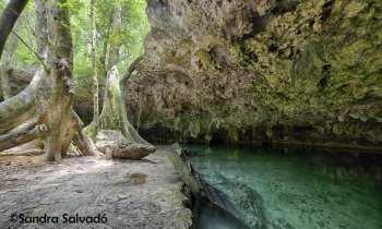 A cenote in Tulum to feel like an explorer: cenote Álamos