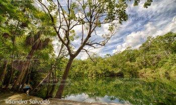 Cenote Carwash, un clásico de los cenotes en Tulum