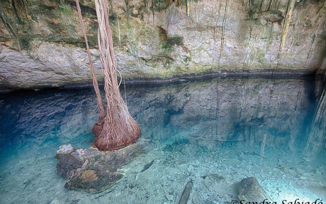 cenote_Santa_Barbara_cenote_Chasikín_Homun