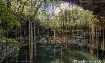 Cenote Secreto Maya, descubre este maravilloso rincón escondido en la selva