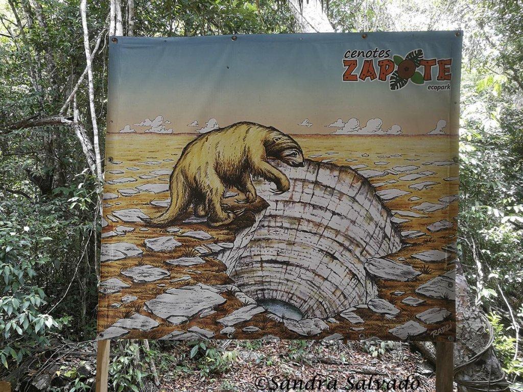 giant sloth sapote