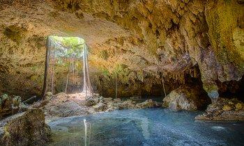 Cenotes en Playa del Carmen: los mejores cenotes en Riviera Maya