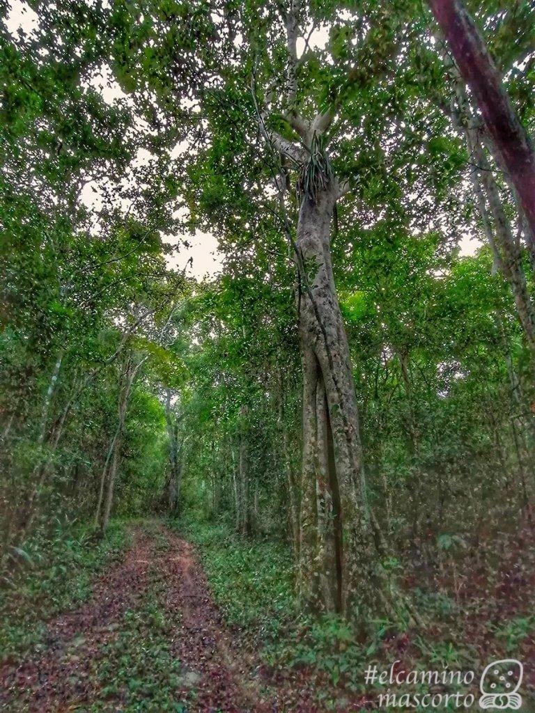 Descubre el centro ecoturístico Síijil Noh Há, pura naturaleza en Quintana Roo 2