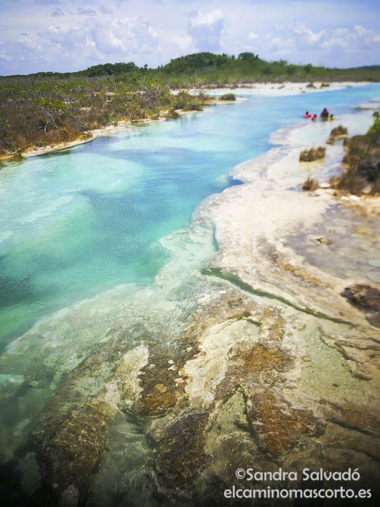 baclar stromatolites