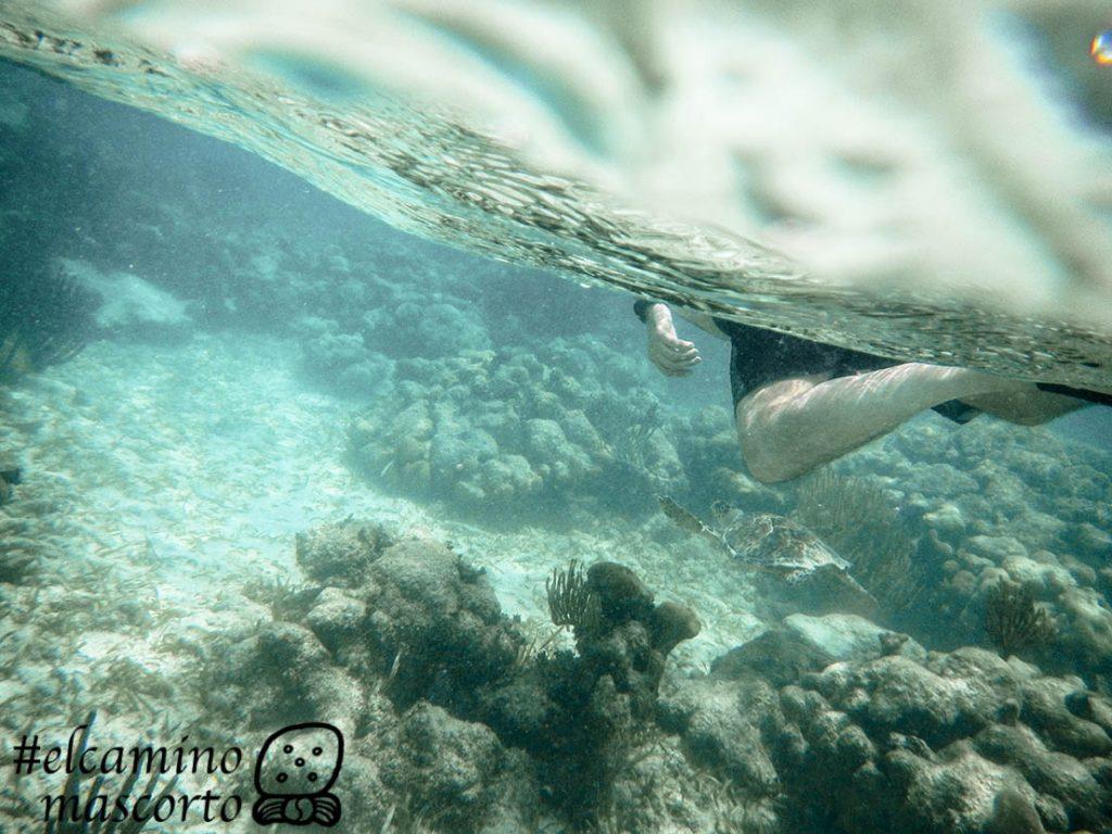 nadar con tortugas riviera mayaa