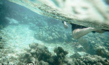 13 sitios fantásticos para hacer snorkel en Riviera Maya