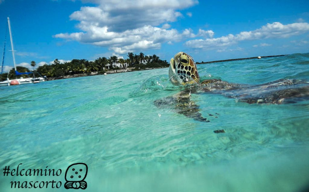 tour tortugas akumal