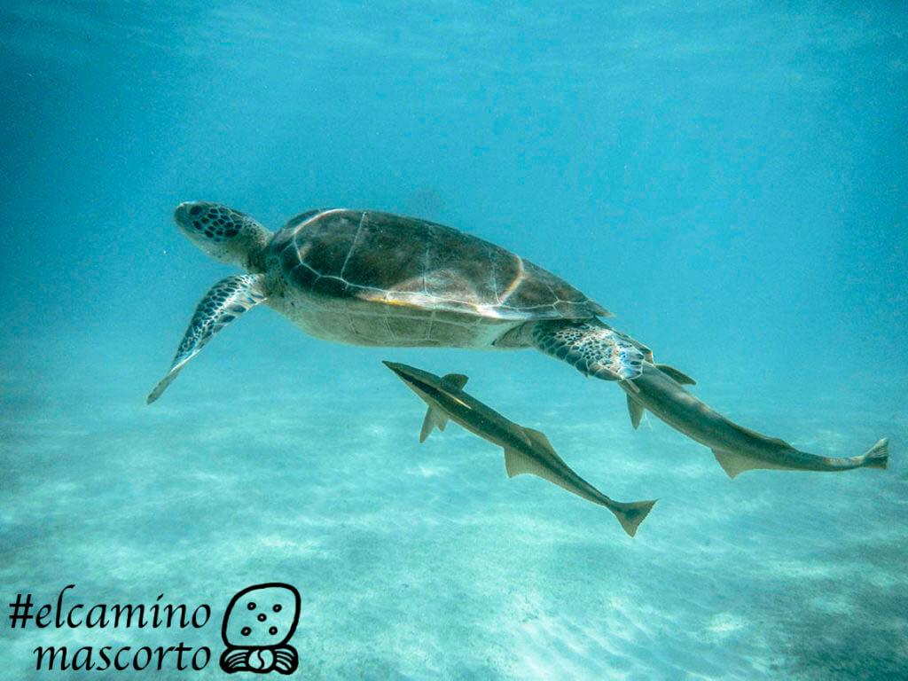 nadar con tortugas akumal precio
