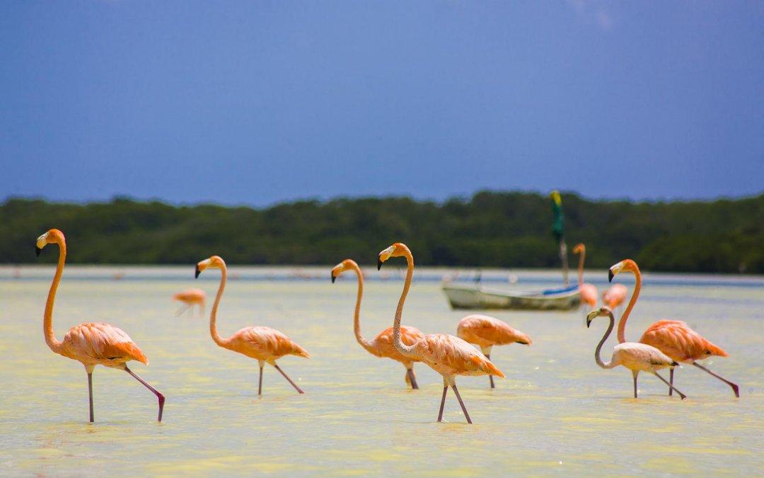 Reserva Biosfera Ría Celestún, más que flamencos