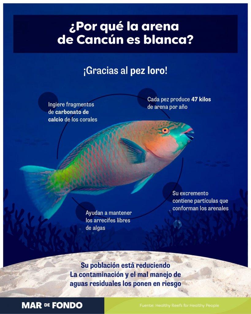 arena blanca caribe mexicano