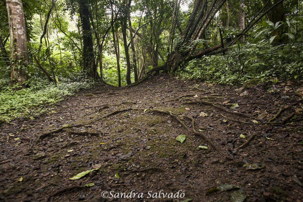 archaeological zone Caracol Belize